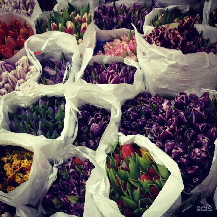 Старлайт цветы оптом благовещенск