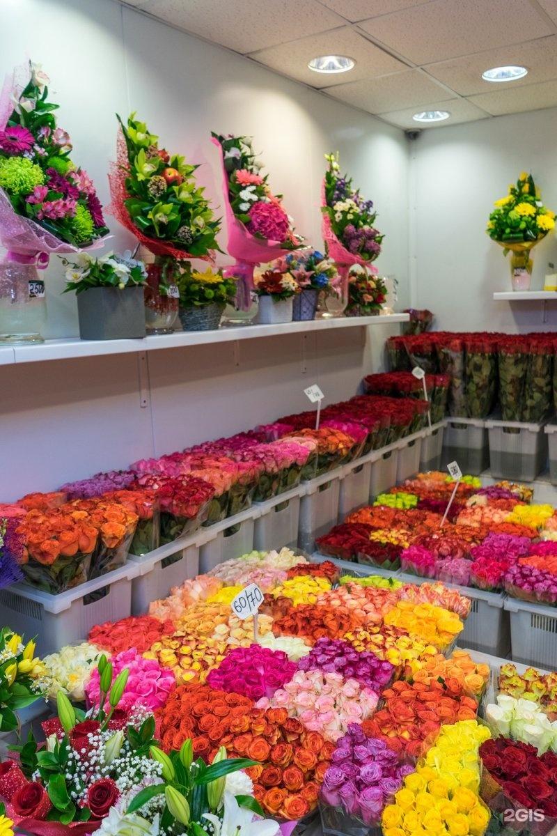 Цветы оптом продажа крымске, эхинацея