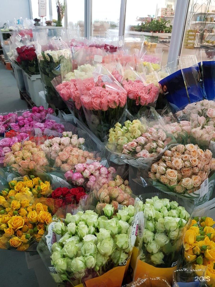 Галантус калуга купить цветы, оптом спб
