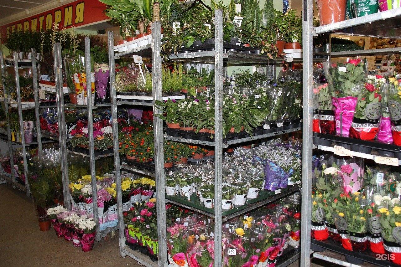 Авеню, оптовый склад цветов в твери