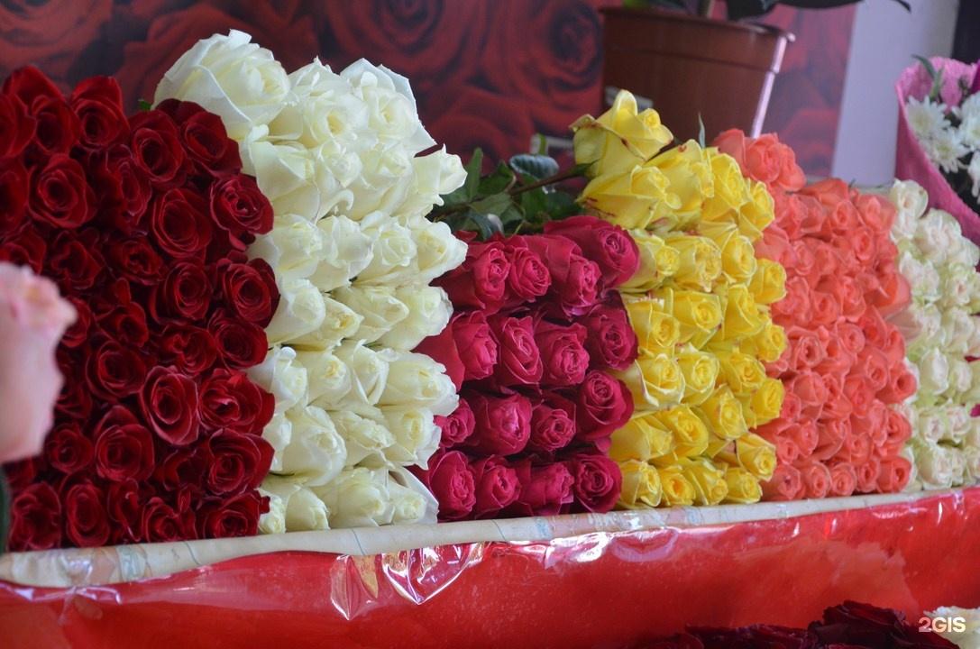 Пионы, оптовая продажа цветов новороссийск